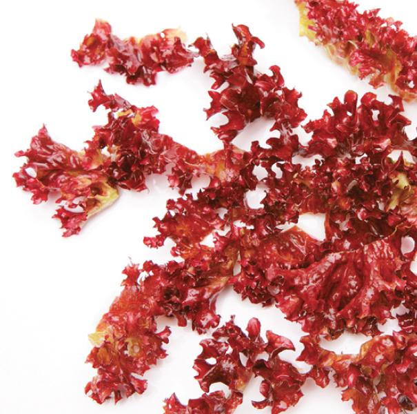 http://www.diiskincare.com/images/DSC-Red-Algae.jpg